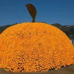 クリスマスオレンジという文化を広げよう。クリスマスに大事な人に温州みかんを送るという文化!