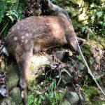 【愛媛で自給自足】昨日はイノシシ・シカ狩り。本日は草刈り。刈払機にやっと慣れてきた。